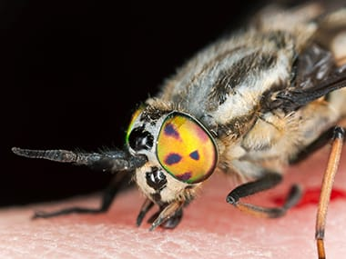 a deer fly on a persons hand in leclaire iowa