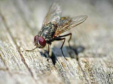 a fly on a picnic table in rock island illinois