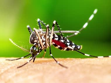 a mosquito biting a persons leg in pontiac illinois