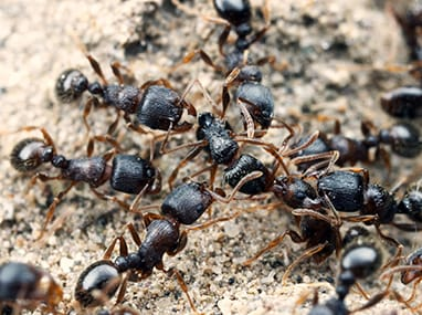 many pavement ants crawling on the ground outside a home in streator illinois