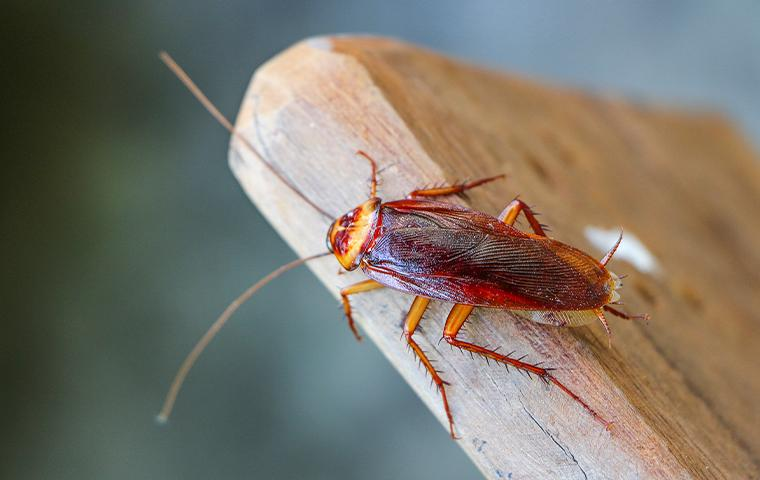 cockroach on a plank of wood