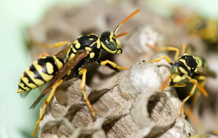 wasps in a hive