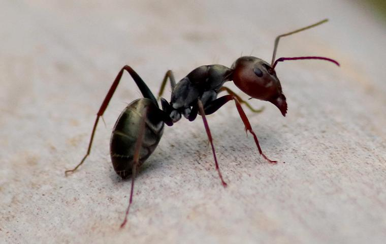 an ant on gravel