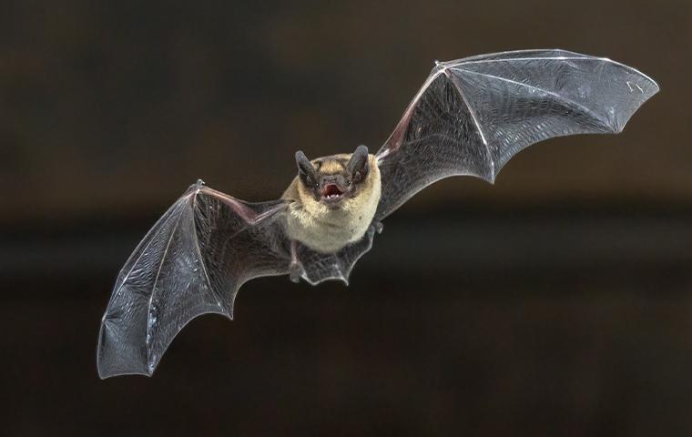 brown bat flying in air