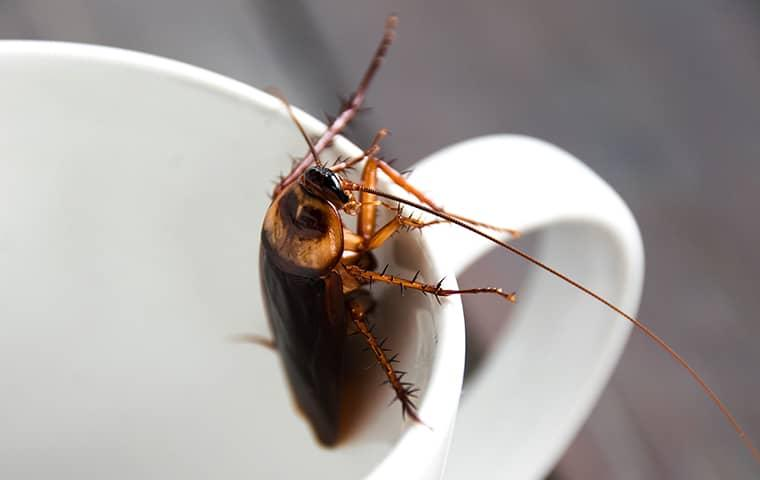 cockroach in dish