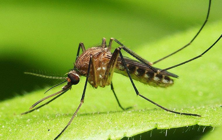 a mosquito perched on a green leaf