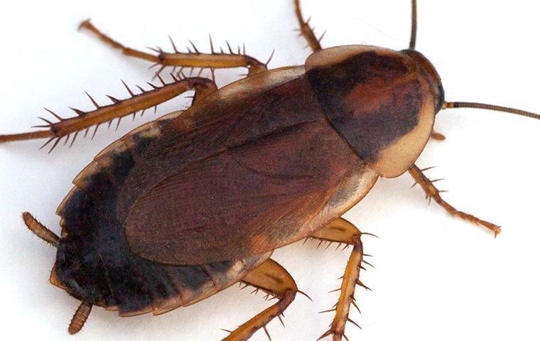 cockroach crawling