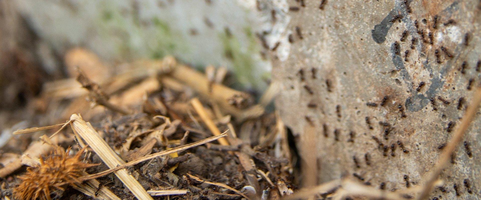 ants on a rock