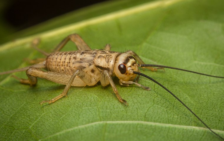 cricket on a leaf