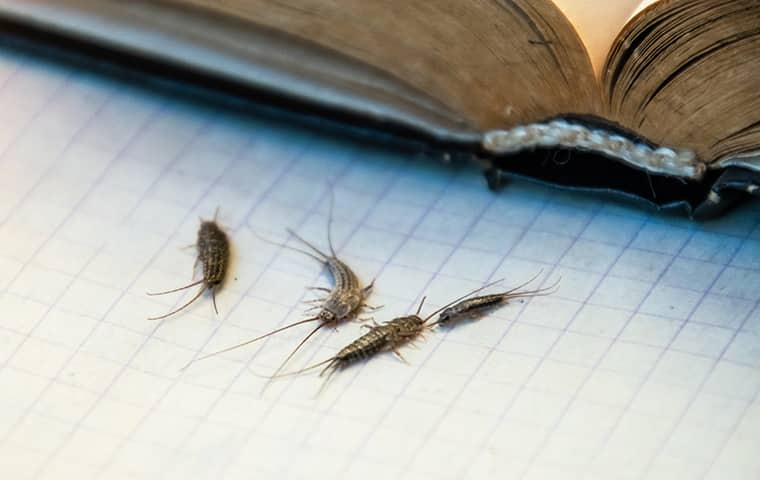 silverfish near books