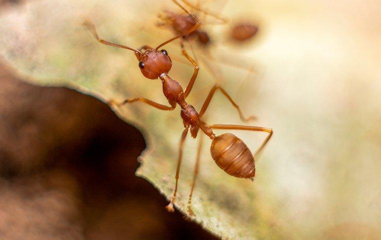 fire ants outside a home