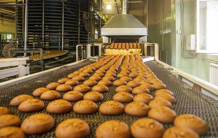 cookies on a conveyer belt