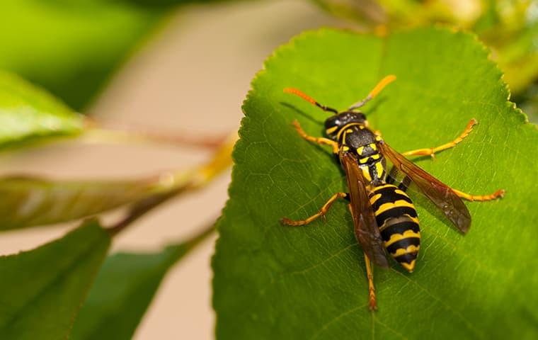 a wasp on a leaf in a garden