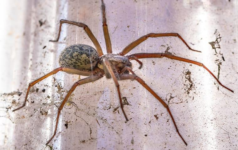 a house spider weaving a web in a home in columbia south carolina
