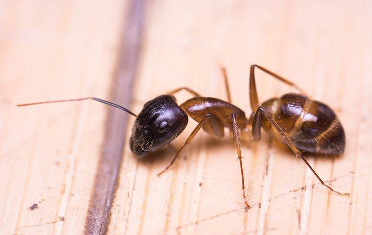 an ant on wood in a home