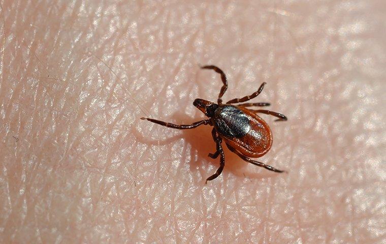 a tick up close on skin