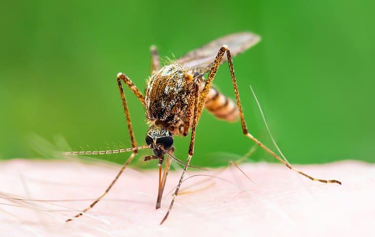 a mosquito biting a lexington south carolina resident