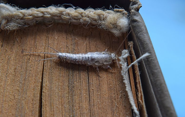a silverfish crawling on a book in the basement of a home