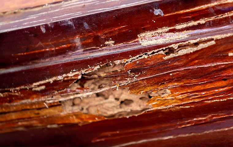 termite damaged wood inside a home