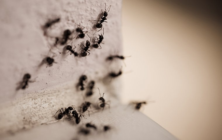 several ants crawling on a wall inside a home