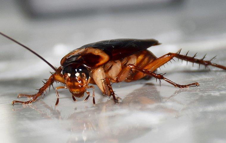 Blog How To Keep Roaches Out When The Weather Gets Colder Charlotte Homeowner S Edition
