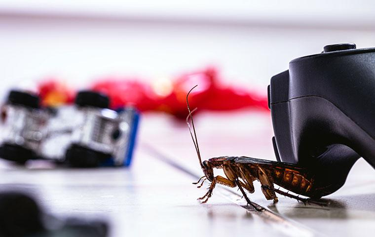 cockroach in a playroom