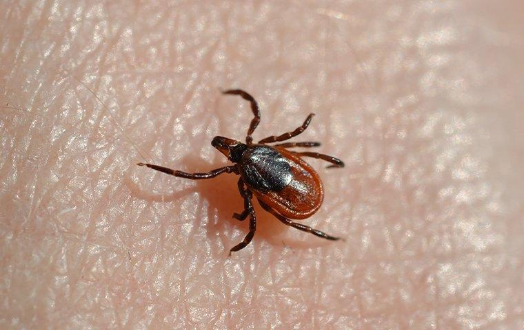 a deer tick crawling on a hand