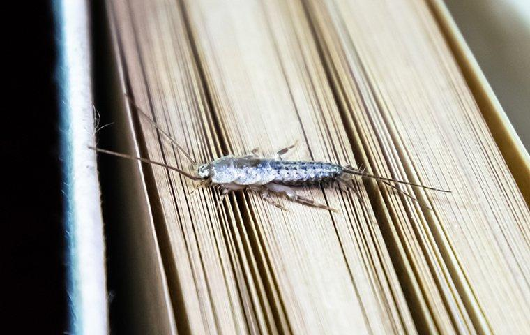 a silverfish crawling on a book in a library