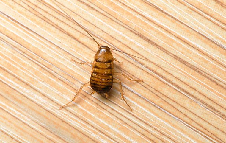 a cockroach crawling on the floor of a home in charleston south carolina