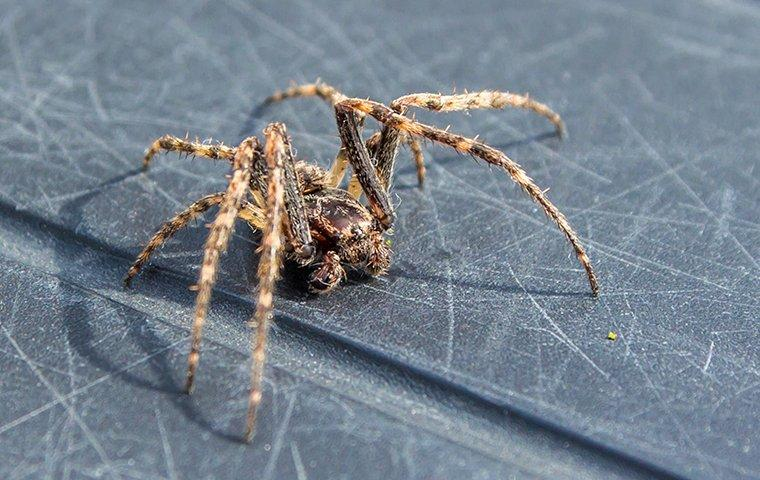 a common house spider crawling on a surface inside of a home in winston salem north carolina