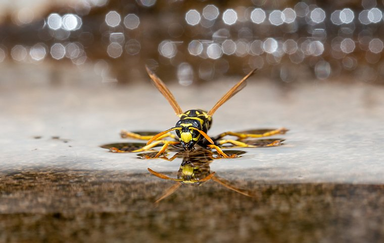 a wasp on a surface outside of a home in greensboro north carolina