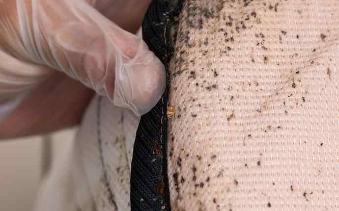 a bed bug infestation in tequesta florida