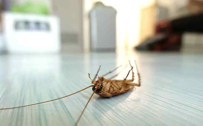 a dead cockroach laying faceup on a kitchen floor