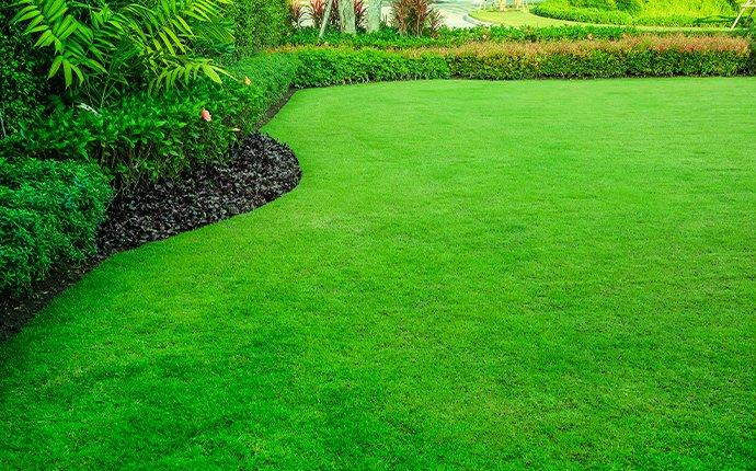 landscaped green lawn protected by pest control