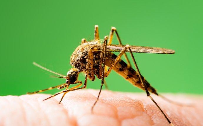 mosquito biting a thumb