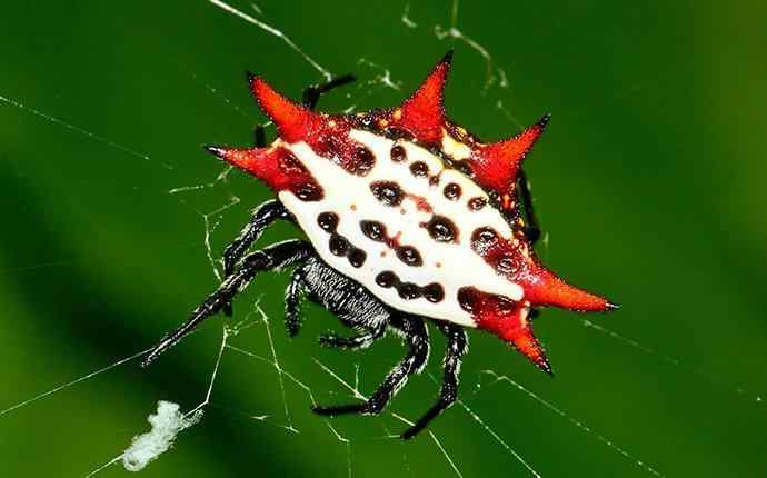 a spider on its web
