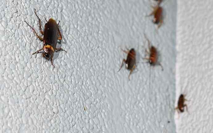 cockroaches on a bathroom wall