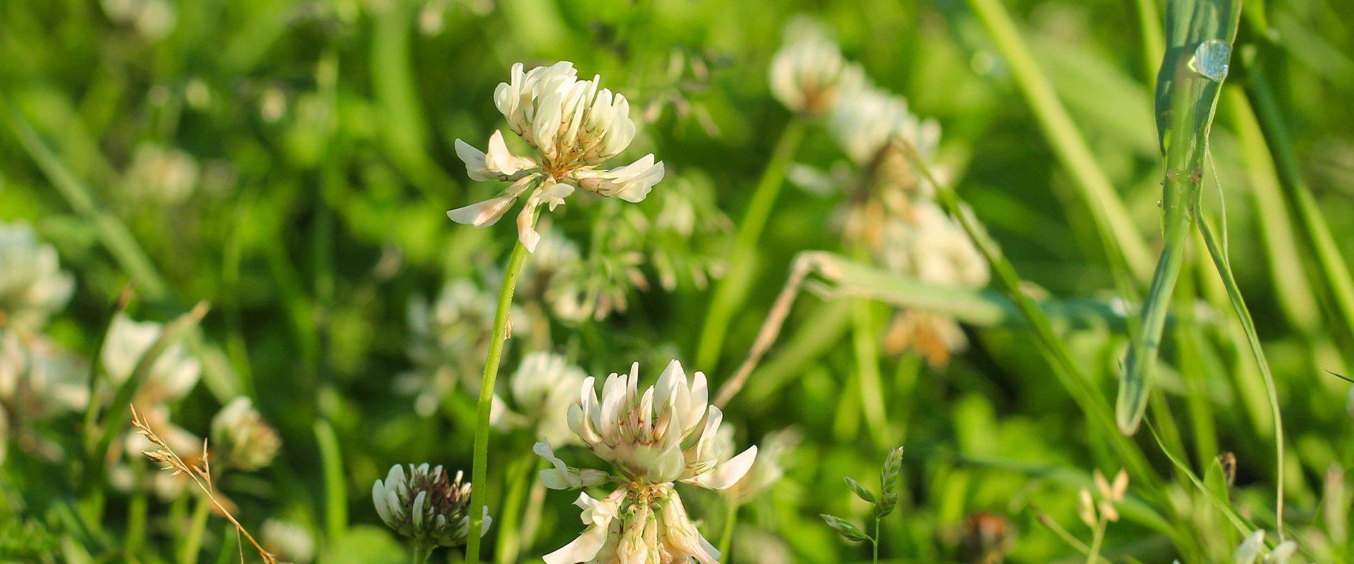 wild flowers in a feild
