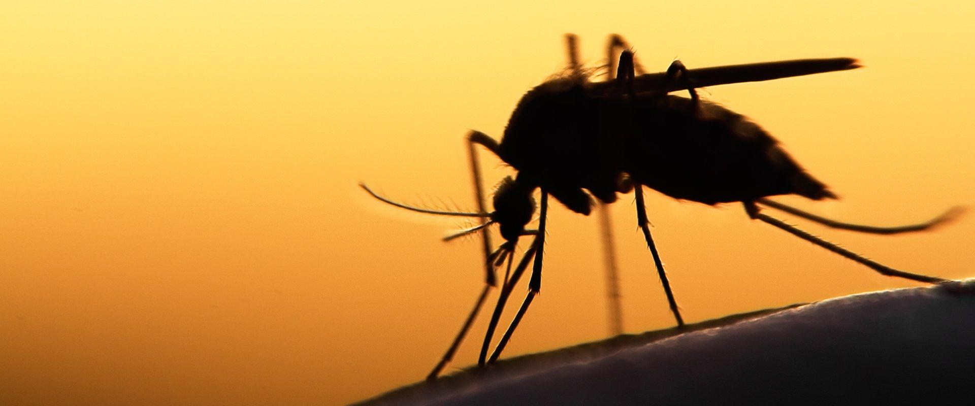 mosquito in front of sunset