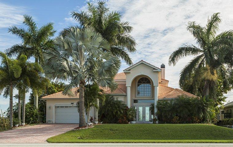 palm trees in manalapan florida yard