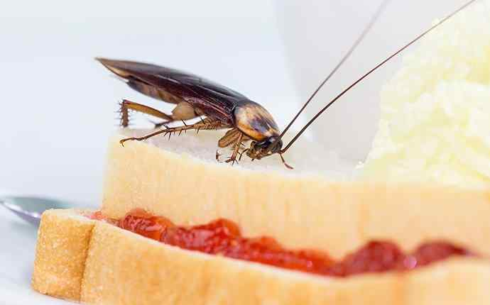 a cockroach eating food in a kitchen