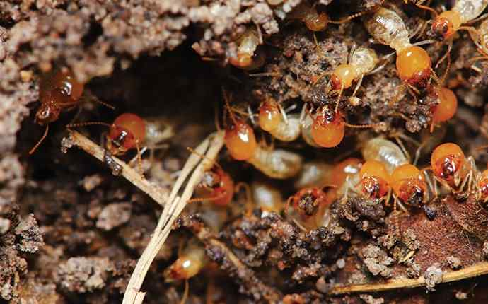 a group of termites around a house in west palm beach florida