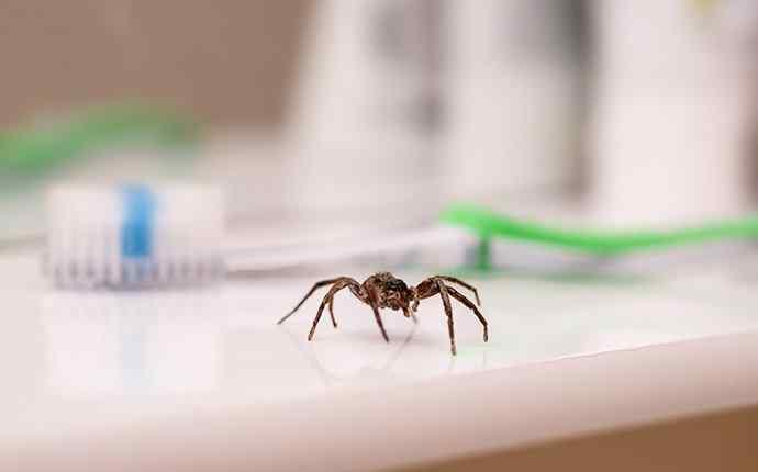 a spider crawling in a bathroom