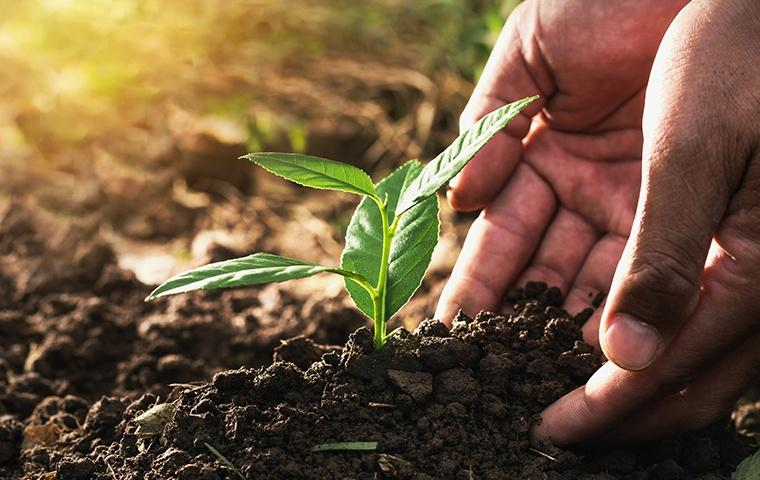 a hand reaching into the soil and treating a sprouting plant outside of a home in chesterton indiana