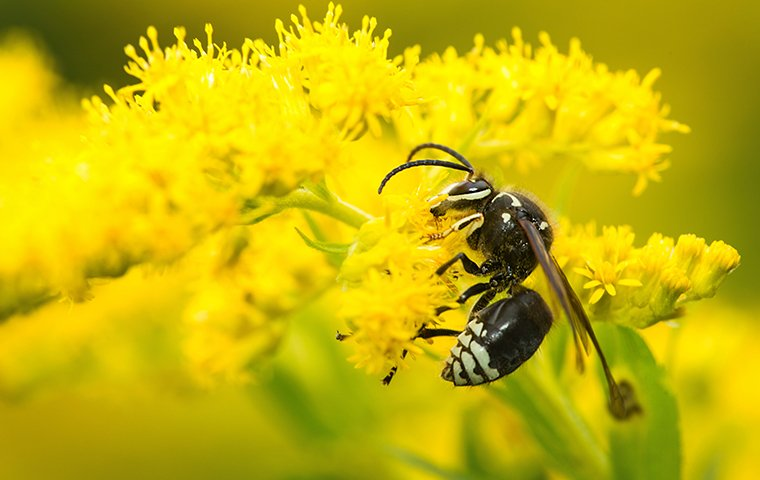 a wasp perched on a flower outside of a home in elkhart indiana