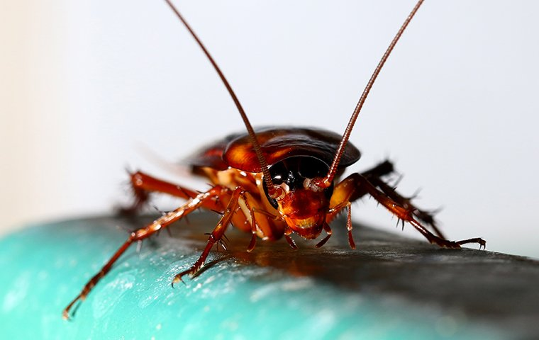 a cockroach crawling on a pipe