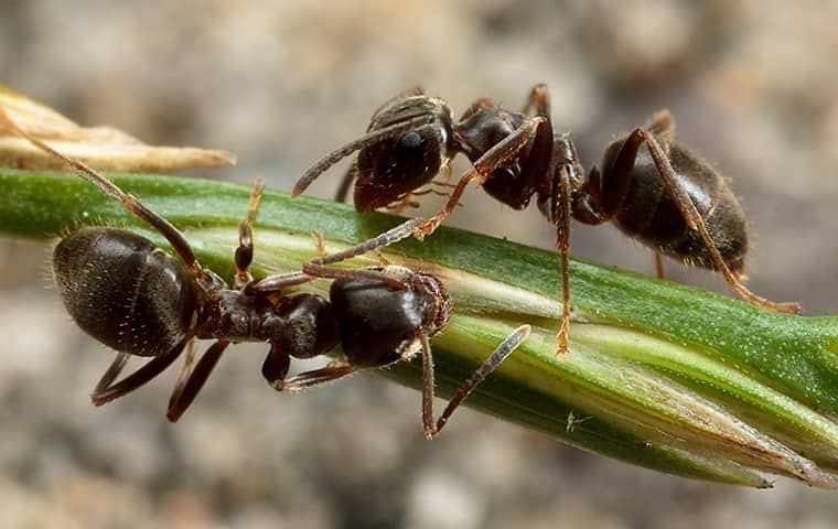 two ants crawling on a plant in palm beach gardens florida