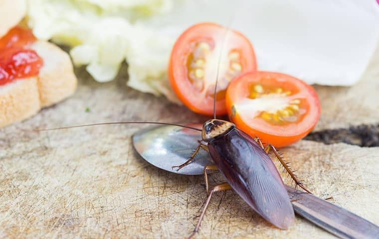 cockroach on a kitchen counter