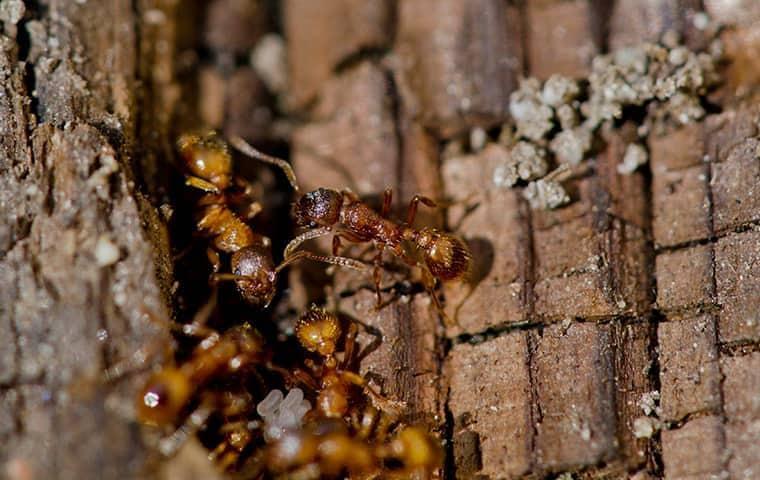 fire ants in a back yard