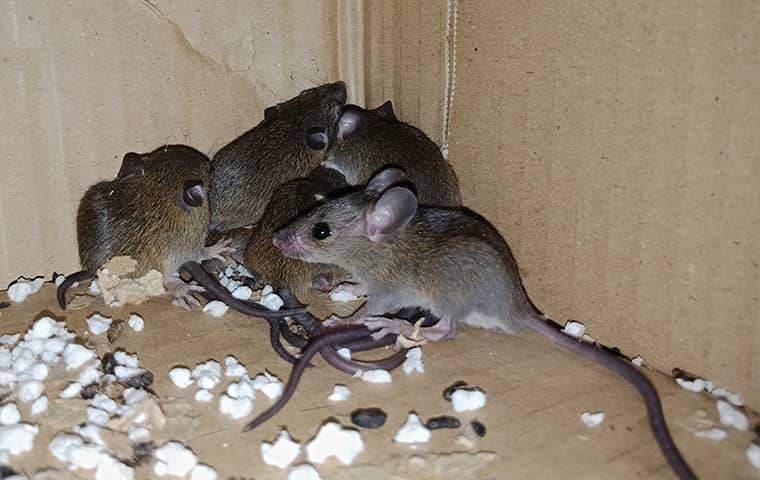 a group of mice in a corner